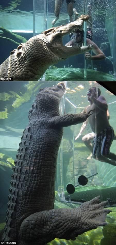 a98060_extreme_2-crocodile-cage